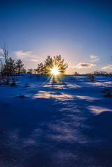 "''The Sun is also a star"" (stefan.pavic1) Tags: sun sunlight sunlights snow winter winterscape winterscene tree trees clouds sky blue outdoor outdoorphoto outdoorphotography outside nature naturephoto flickr flickrphoto nikon nikonphoto photo photography serbia dimitrovgrad"