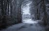 early walk (Florian Grundstein) Tags: oberpfalz bayern outdoor nature hike street trees path walk germany bavaria dahoam nikon d5200 dx tamron vc 1750