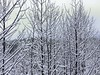 ~ Snowy Branches ..... (~ Cindy~) Tags: wintertimeintennessee trees snow backyard january2018 htt