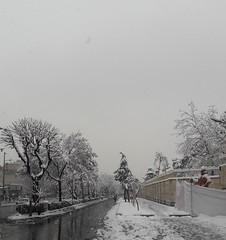 20180128_110642 (afs.harp) Tags: snow trees street white winter tehran beautiful