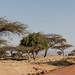 IMG_5246 Ethiopia