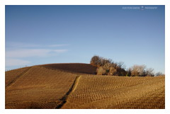 Anche tu sei collina... (GP Camera) Tags: nikond80 nikonafsdx18105mmf3556gedvr countryside campagna sky cielo hill collina vineyards vigneti trees alberi fronds fronde paths sentieri blue blu brown marrone morning mattino morninglight lucedelmattino shadows ombre textures trame depthoffield profonditàdicampo vignetting focus messaafuoco silence silenzio solitude solitudine calm calma quiet quiete shades sfumature winter inverno whiteframe cornicebianca italy italia piemonte monferrato darktable gimp opensource freesoftware softwarelibero digitalprocessing elaborazionedigitale