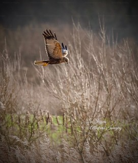 Marsh hunting.