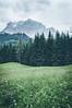 Mountain View (mattinho2704) Tags: grass mountainscape landscape tirol austria mountains d300 naturephotography wald natur landscapephotography bäume zugspitze bichlbach travel wandern naturphoto desaturated forest hiking photography explore hafen österreich ehrwald mountain
