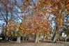 (040/18) Otoño  en Aranjuez (Pablo Arias) Tags: pabloarias photoshop photomatix capturenxd españa cielo nubes parque hierba árbol color hojas madera otoño aranjuez madrid