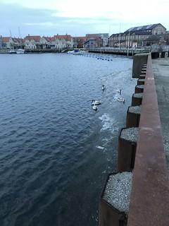 A walk by the Sea #Ön #Limhamn #Malmoe #sunset