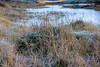Frost on the plants around Long Moss Tarn on Torver Back Common (kenemm99) Tags: 5dmk3 cumbria coniston canon winter places kenmcgrath frost longmosstarn tarn