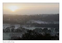 Campagne ligérienne (Bruno-photos2013) Tags: brume brouillard paysage paysageligérien paysdeloire landscape maineetloire anjou leverdujour sunrise nature campagne