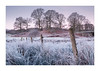 Sub Zero (Dave Fieldhouse Photography) Tags: subtle lakedistrict lakes cumbria nationalpark riverbrathay elterwater trees dawn sunrise morning winter freezing frost cold fence grass grasses reeds clear pinks wire weather river fuji fujifilm fujixt2 wwwdavefieldhousephotographycom countryside outdoors uk england landscape