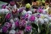 Klettenblüten 3 (tama*) Tags: garten juli wildpflanze strauss