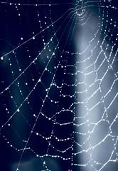 Macro Monday my favourite novel (peterbaird100) Tags: theweb web myfavouritenovel macromonday