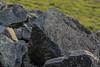 Baumaterial für den Luppedamm (joergpeterjunk) Tags: leipzig west outdoor lützschena natur steine bruchsteinecanoneos50d canonefs1785mmf456isusm