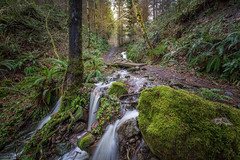Water Under the Bridge (writing with light 2422 (Not Pro)) Tags: pacforest washingtonstate waterfall hww happywaterfallwednesday richborder a77 sonya77 trail hikingtrail darlingtonia