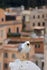 The scream (Thomas Roland) Tags: gull seagull måge sølvmåge scream skrig view udsigt rome rom roma italia italy italien europe europa travel rejse holiday city by stadt roman tourist tourism destination visitors
