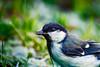 Approaching (Rico the noob) Tags: grass 300mm closeup d500 birds outdoor animal published 2017 macro zurich schweiz switzerland 300mmf4pf dof schlieren animals eye bokeh nature bird