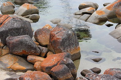 Rockpool (Miguel Cullen-Green) Tags: water ocean rocks red tasmania australia rockpool lansdcape shore