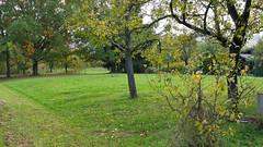 Os17_284 (vitalijsosna) Tags: vitalij sosna herbst autumn natur landschaft garten landskape himmel sky rosen blumen flowers grass outdoor park panasoniclumixg70 panasonicgvario1442