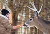 feeding the deer (marianna_a.) Tags: girl feeding animal deer stag antler trees bokeh hbw mariannaarmata