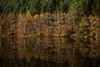 fond d'écran (Steph Blin) Tags: forêt forest trees firs arbres sapins nature lac lake barrage lamuratte eau water reflexion reflets fall automne auvergne forez 63 woods bois