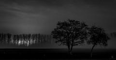 Licht im Dunkeln (st.weber71) Tags: nikon d850 nebel niederrhein blackandwhite schwarzweis sw bw landschaft landscape natur baum bäume lzb langzeitbelichtung nightshot outdoor germany deutschland strommast nachtfoto nachtfotografie