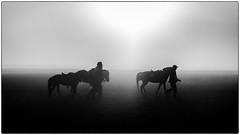 Dans la caldera du Mont Bromo ! (bertranddorel) Tags: soleil contrejour ombres silhouette sun brouillard nuages chevaux cavaliers hommes people caldera volcan java indonésie asie asia brume bnw bn nb noiretblanc blackandwhite