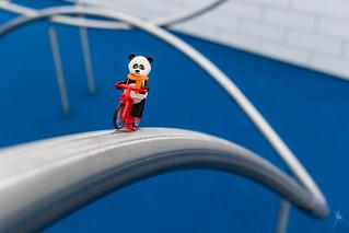 Panda on a bike