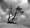 Merthyr Mawr  1953. Trees 1. (brian.batters (B-C-B)) Tags: tree treetrunk stream merthyrmawr candlestoncastle