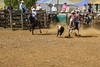 343A7087 (Lxander Photography) Tags: midnorthernrodeo maungatapere rodeo horse bull calf steer action sport arena fall dust barrel racing cowboy cowgirl