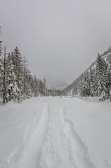 _D7K2257 (lions_italy) Tags: escursioni gsv lagodellefate macugnaga marcoturconi