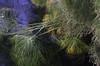 Siracusa, Sicily (Possum Inc.) Tags: siracusa sicily italy europe papyrus