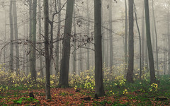 The Colors of Winter (Netsrak) Tags: baum eifel europa europe herbst landschaft natur nebel wald autumn fall fog landscape mist nature woods bäume