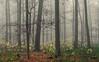 The Colors of Winter (Netsrak) Tags: baum eifel europa europe herbst landschaft natur nebel wald autumn fall fog landscape mist nature woods bäume