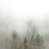 Trees in the Mist (Michael Berg Photo) Tags: highway20mountains michaelberg michaelbergphoto canon canon6d 135f2 135l 135mmf2l trees fog mist mountains northcascades cascades washington