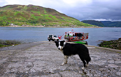 Black Eyed Dog (plot19) Tags: scotland sony rx100 uk britain plot19 islands