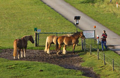 IMG_6443 (Lightcatcher66) Tags: pferdehorses florafauna makros lightcatcher66