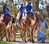 Cameleers! (Nina_Ali) Tags: camelride morocco camel peopleoftheworld maghreb afrique africa ninaali february2018