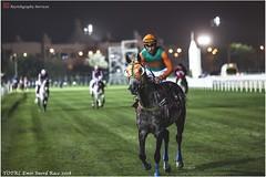 IMG_7190 copy (Services 33159455) Tags: qatar doha horse racing qrec emir horseracing raytohgraphy