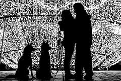 """Muestras de amor"" (Alyaz7) Tags: nikond7200 lentenikonnikkorafs55300mm14556gdxedvr rawquality tripievanguardaltapro263ap flashtriggersyongnuorf603nii autorretrato selfportrait amor love contraluz backlight siluetas silhouette mascotas pets perros dogs siberianhusky pareja couple luces lights blancoynegro blackandwhite"