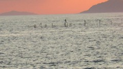 MVI_1704 (georgetacos) Tags: bird fly okinawa kerama catchingfish 沖縄 慶良間 鳥