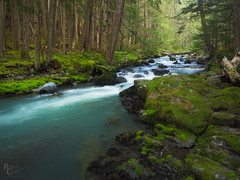 Glacial Flow in the Olympic Forest (RobertCross1 (off and on)) Tags: 1250mmf3563mzuiko dungenessriver em5 longexposure omd olympicnationalforest olympus pacificnorthwest wa washington creek forest glacier landscape moss mountains nature rapids river trees water wilderness clallam
