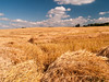 _7316062 Fresh Cut Wheat (Charles Bonham) Tags: wheat grain wheatheads northdakota farm farmland field wheatfield cumulusclouds sky charlesbonhamphotography
