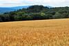 Wheat Field (Infinity & Beyond Photography) Tags: germany wheat field scenery