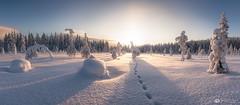 winterwonderland lapland (mainone) Tags: lappland popcorntree landscape landschaft europa finland äkäslompolo kuer panorama suomi snow winterwonderland sun popcorntrees kuertunturi trees europe finnland arctic