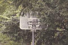 Three Points (CoolMcFlash) Tags: basketball sport abandoned tree canon eos 60d tamron b008 lost 18270 photography fotografie alt old verlassen basket basketballkorb korb