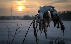 a good morning (Florian Grundstein) Tags: goodmorning sunrise upperpalatinate bokeh bayern bavaria lake landscape morning mood ice dahoam panasonic mft nopeople nordbayern