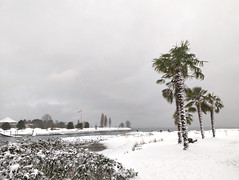 Snow at English Bay (Ruth and Dave) Tags: englishbay vancouver westend beach palmtree winter wintry weather weatherphotography sea ocean inlet vanierpark bramble shrub