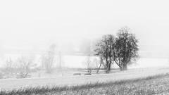 Neige (omj11) Tags: zurich montagne neige paysage suisse brouillard hiver 169 noiretblanc monochrome olympus