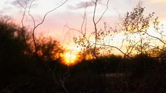 Desert sunsets (Coisroux) Tags: desert scottsdale arizona d5500 nikond silhouette landscape mountains luminescence