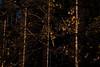 EOY.160.1_160 s.f_11.150.0 mm.4834.jpg (Jonitron) Tags: digitalphotography color tacomawa 2017 jonitron 28300mmf3556 nikon d610