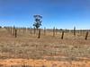 farm fence post plantation (cheezepleaze) Tags: posts farm dry hff iphone